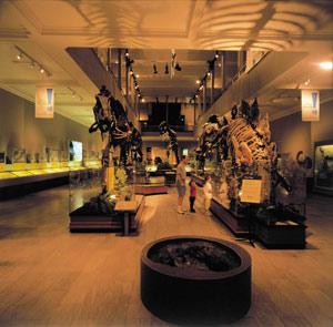 Dino Hall Carnegie Museum & Knight Sound u0026 Lighting   Specialized Knowledge. Professional ... azcodes.com